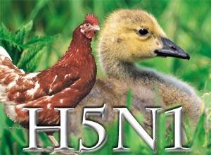 Avian Flu Pandemic