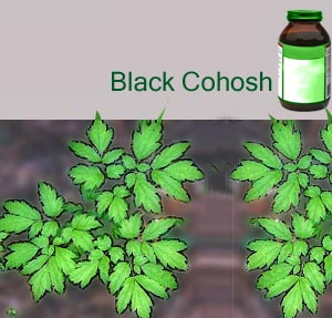 Black Cohosh Benefits