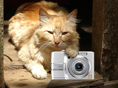 Digital Camera Maintenance - pitfalls