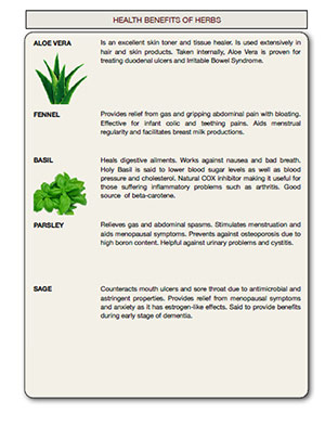 Download the Health benefits of Herbs table