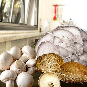 Edible Mushroom Recipes