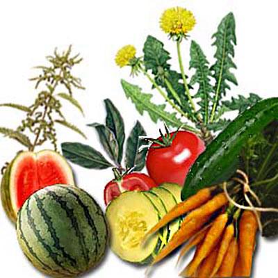 Natural Diuretic Foods