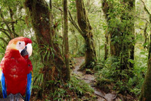 Travel to Costa Rica
