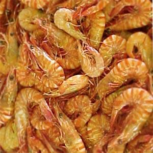 Scampi Shrimp